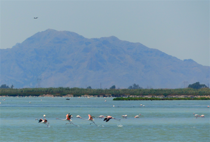 flamingo's at the salt flats of Santa Pola