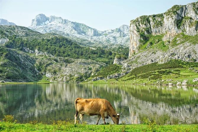 Enjoy the fairytale scenery in Picos de Europa