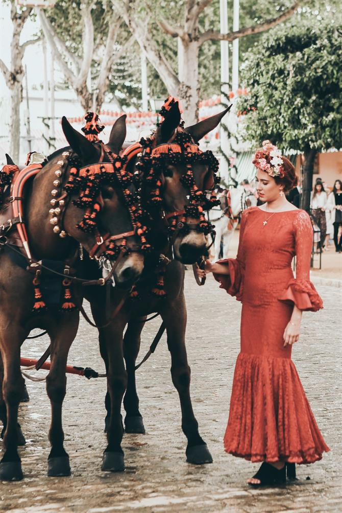 Andalusian horse, Seville