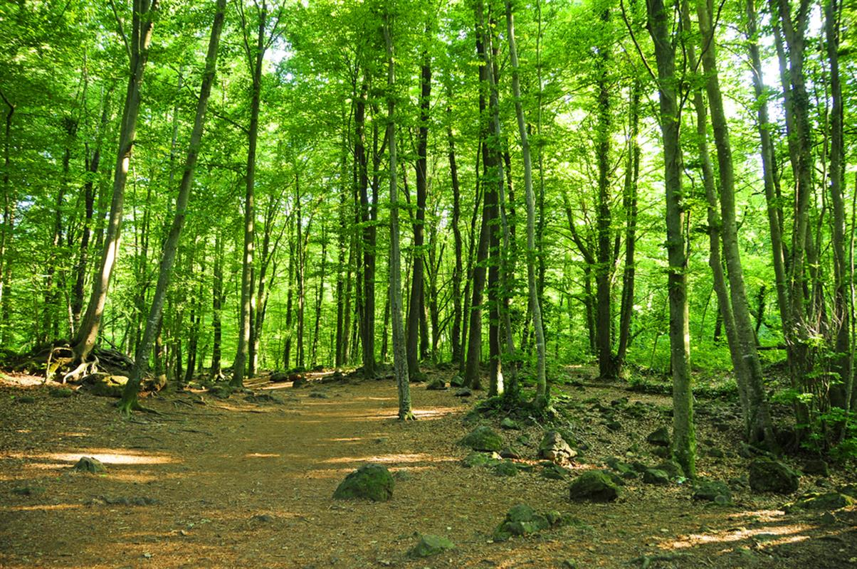Ikea Home Top 10 Spanish Forests