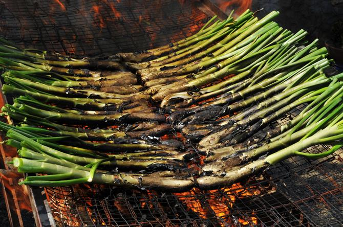 Calçots, typical catalan sweet onions