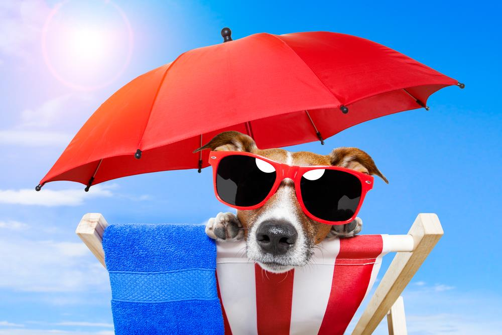 Travelling with pets taking your cat or dog on holiday to spain summer holidays pet friendly publicscrutiny Gallery