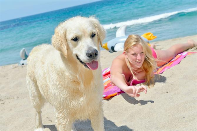 Summer holidays - pet friendly