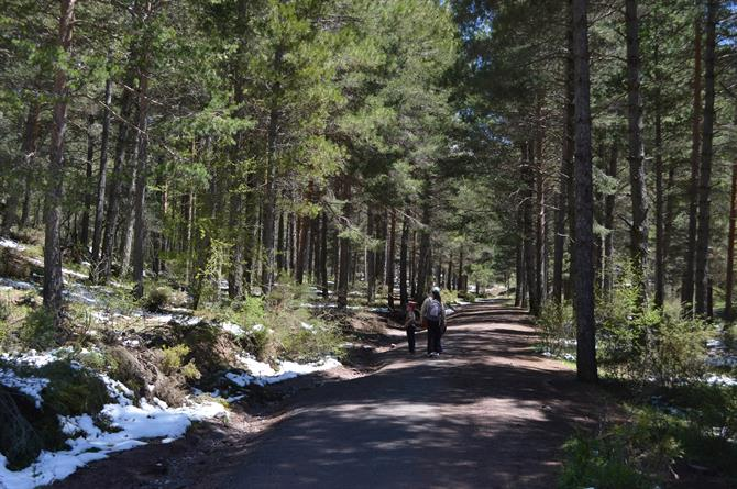 Sierra de Huetor Natural Park - Pine forests