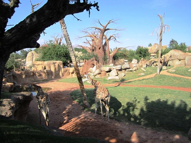 The bioparc discover the african savannah without leaving valencia - Bioparc de valencia ...
