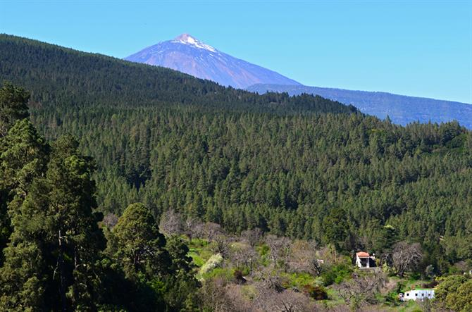 La Orotava Valley and Mount Teide, Tenerife