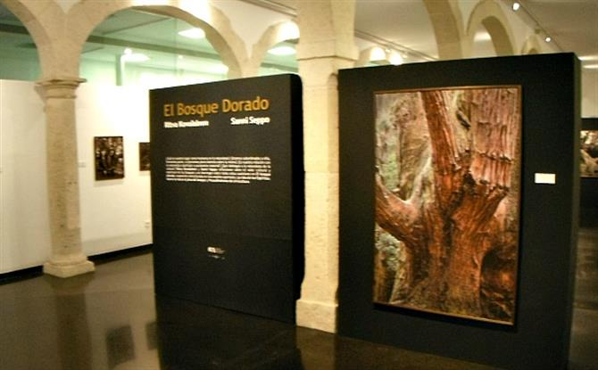 exhibition,photography