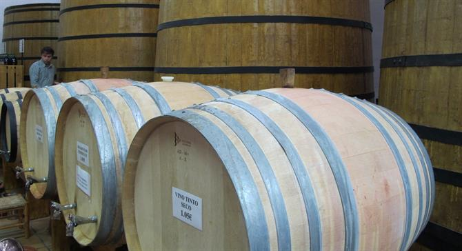 Wine barrels in Jalon