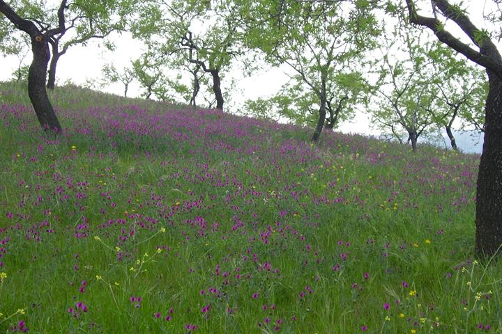 Wild spring flowers of the Alpujarras