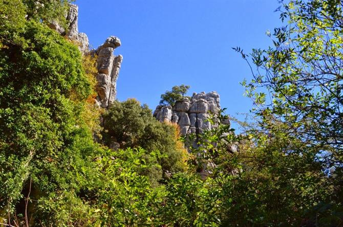 Plants and life in El Torcal natural park