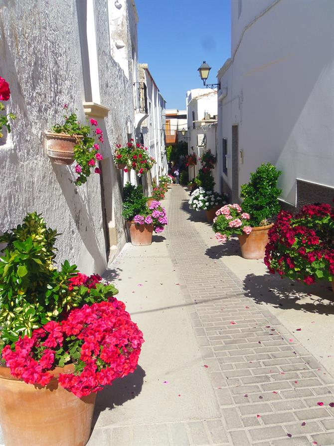 White-washed houses in Lucainena de las Torres in Almeria