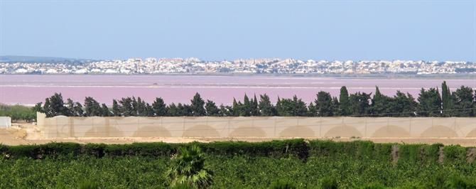 Torrevieja's amazing pink salt lake