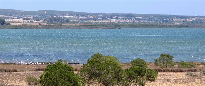 Torrevieja's green lake is a haven for wild birds