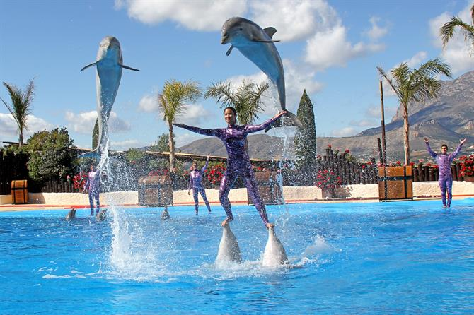 Dolphin show at MundoMar, Benidorm, Alicante