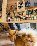La Fourmi Interior - Imported beers and Dog