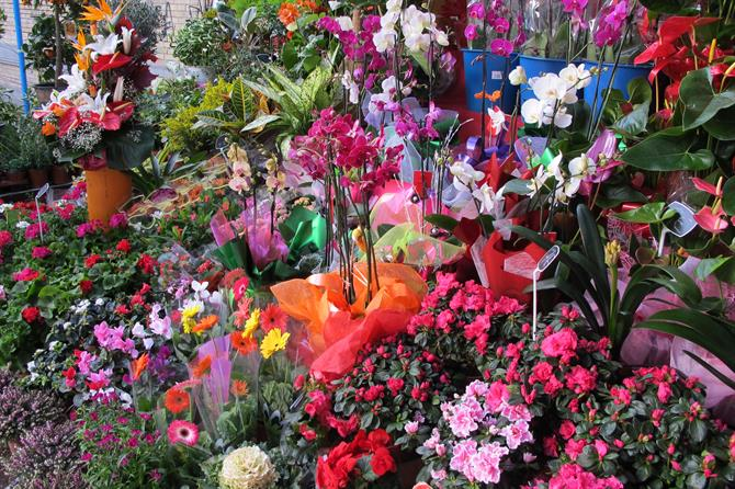 Flower stall outside Alicante market