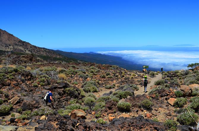Teide Nationalpark, Tenerife