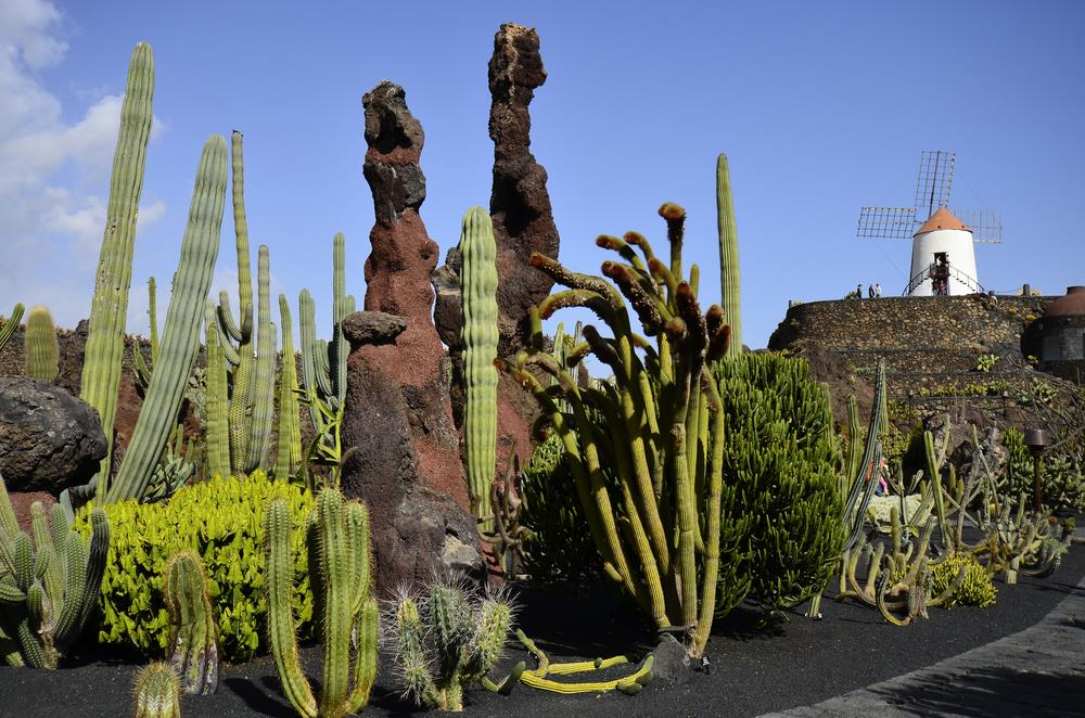 Discover ces r manrique and his wonderful buildings and for Jardin de cactus lanzarote