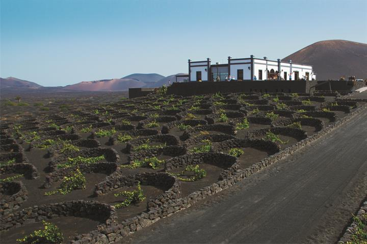 Seven sensational Lanzarote wineries