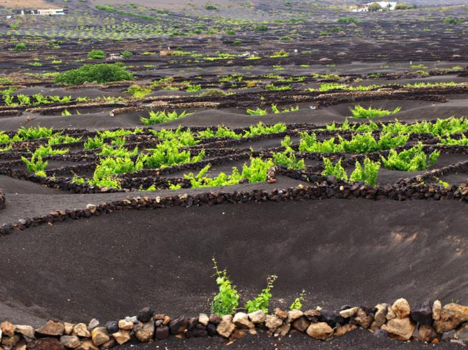 Vineyards, La Geria på Lanzarote