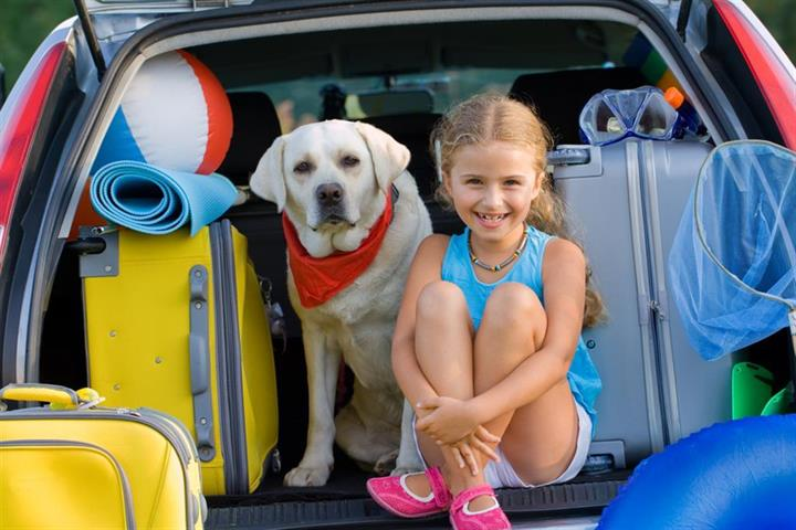 The rise of dog-friendly tourism
