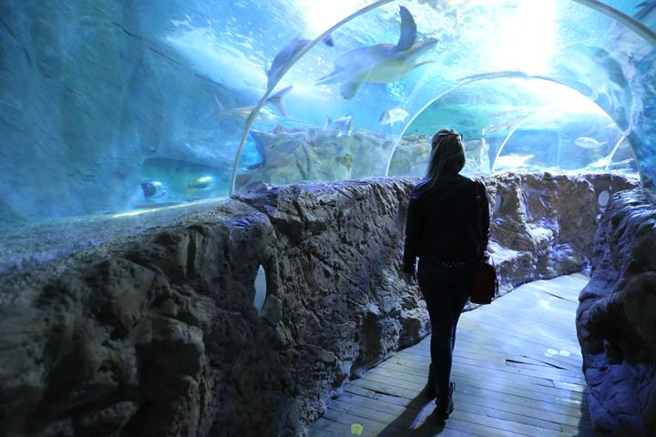 Visiting the Sea Life Aquarium, Benalmádena