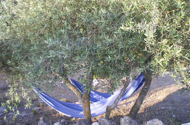 A lazy day in one of our blue hammocks under the olive trees