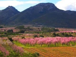 Almond trees in the Jalon Valley