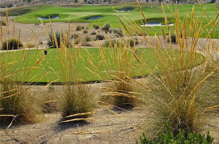Alhama Signature Golf Course