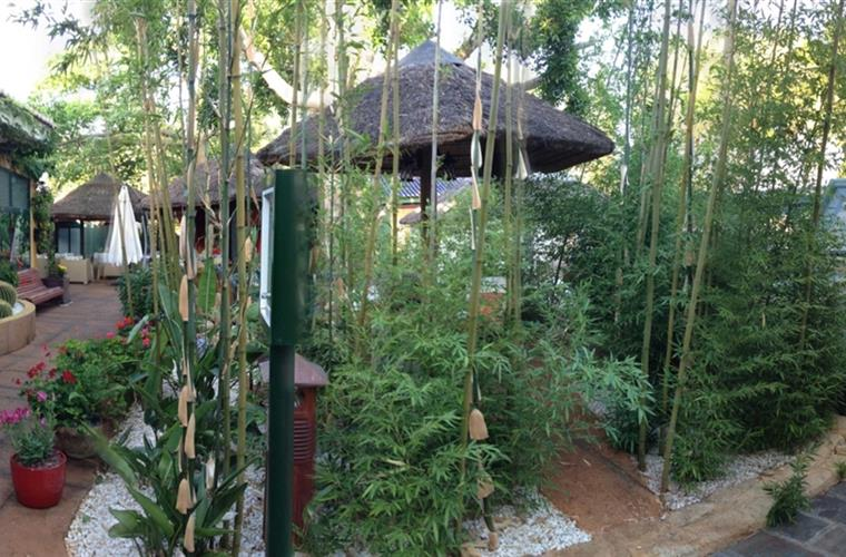 Details of the garden with bamboo and native plants