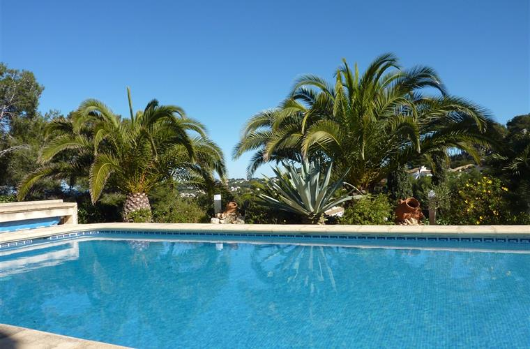 10 x 5 meter pool with palm trees