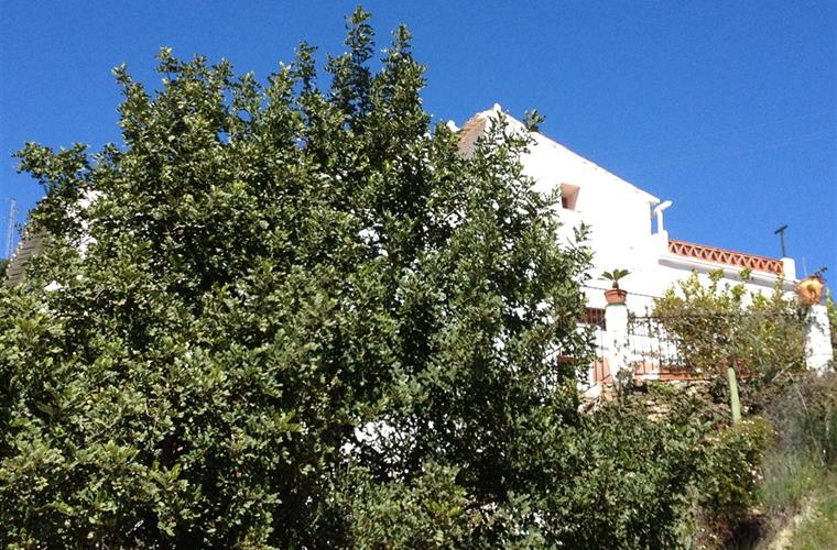 The Algarobbo tree offers welcome shade at the pool side