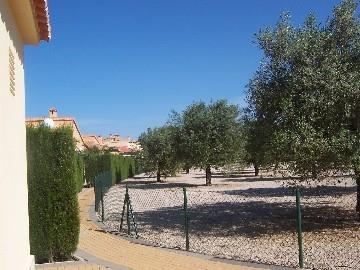 olive grove next to villa