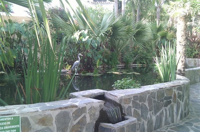 Tropical fish pond
