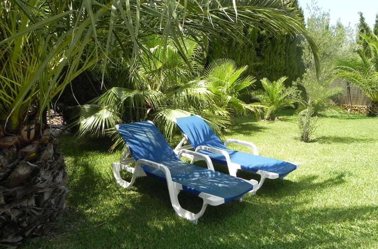 Sunloungers in Garden under the Palm Trees