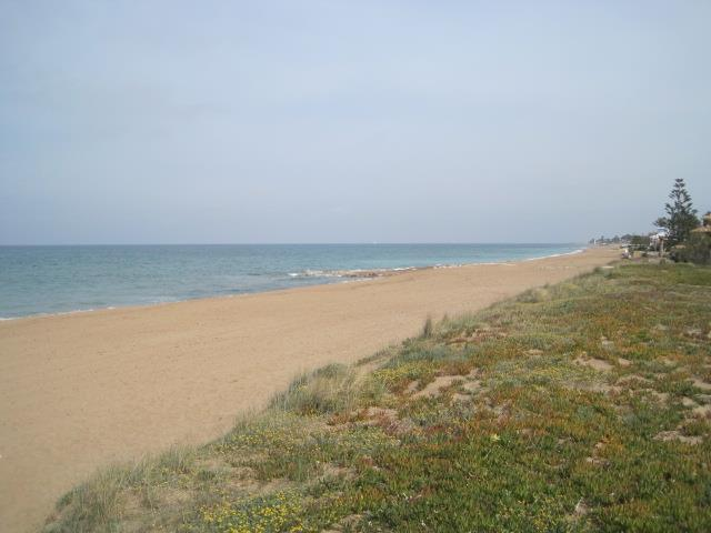 sandy beach and dunes