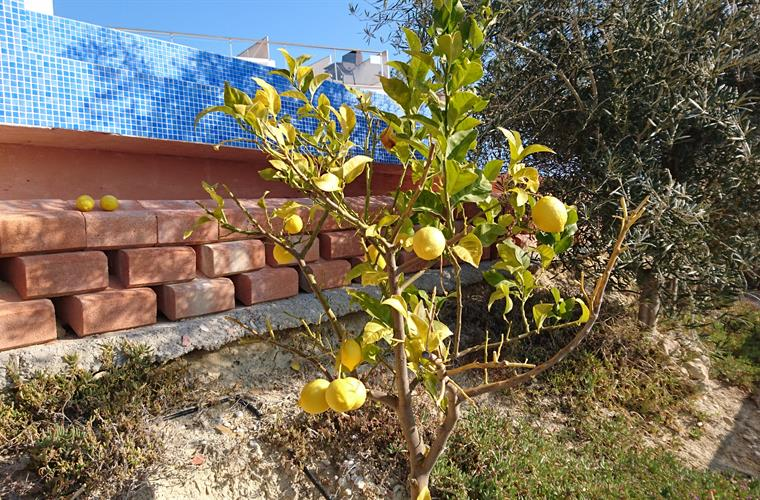garden with lemon and orange trees