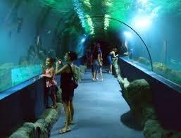 There aquarium in Almuñecar is a pleasure for the whole family!