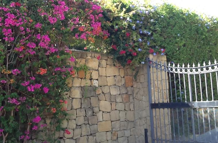 Flowers at the front gate