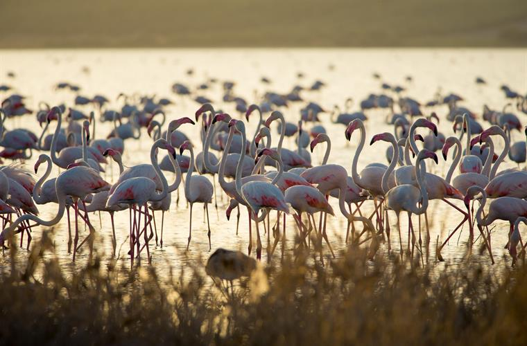 Flamingos at the nearby Laguna de Fuente de Piedra