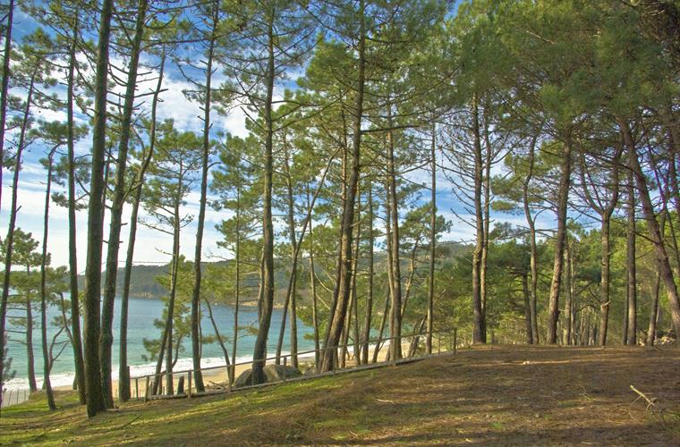 Forest and Beach of Barra