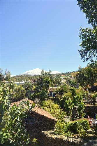garden with mount Teide behind