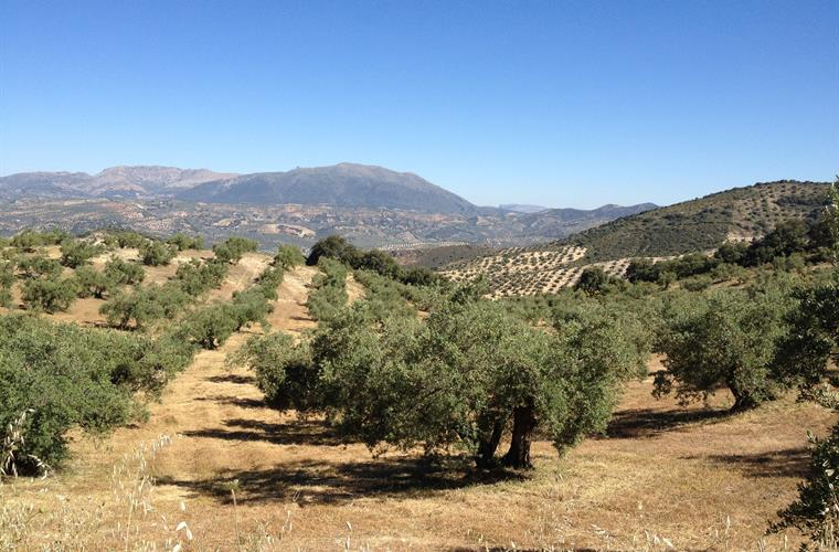 Uninterrupted views of surrounding olive groves