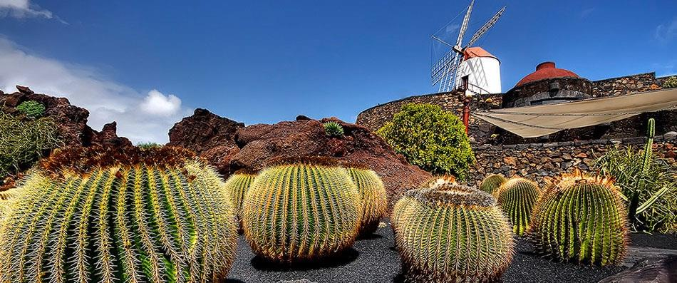 Local attraction: cactus garden by Cesar Manrique