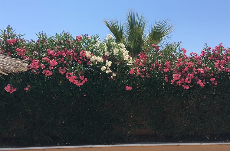 Flowers in the swimming pool area