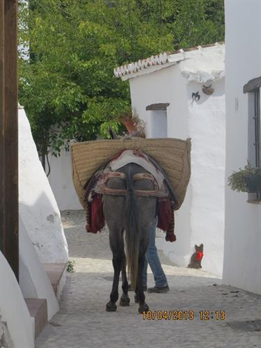 Traditional farming methods alive and well here in rural Spain