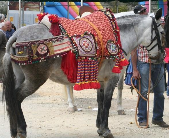 Mule dressed for the village fiesta
