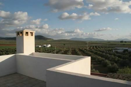 Rear Roof Deck view towards olives