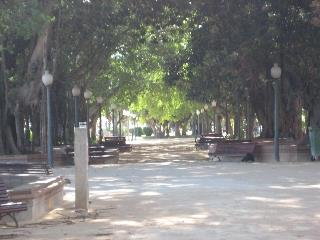 Tree shaded area in Alicante