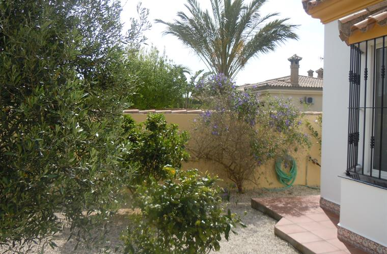 Front garden with citrus fruit trees and olive tree.